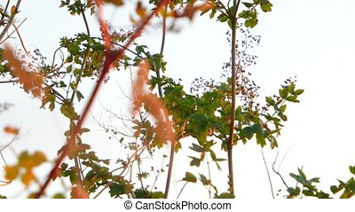 Low angle shot of steppe plants blowing in the wind