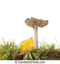 Low angle view of a toadstool