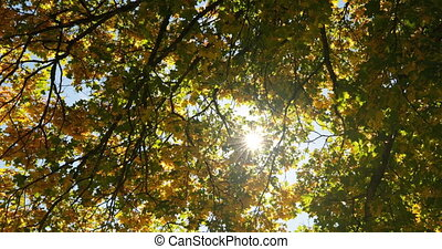 Low angle view of autumn leaves. Yellow autumn leaves on a sunny day 4k