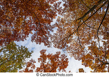 Low angle view of autumn trees perspective
