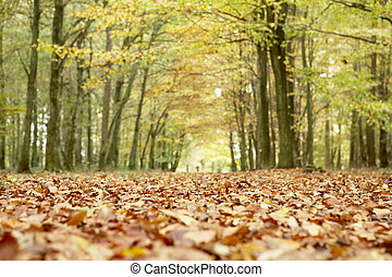 Low Angle View Of Autumn Woods