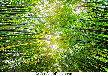 Low Angle View of bamboo