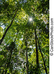 Low angle view of green rainforest in Queensland, Australia