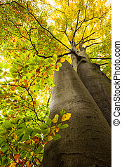 Low angle view of large trees - Low angle view of two high...