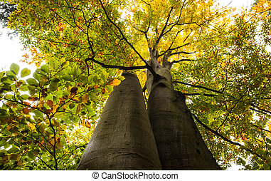 Low angle view of large trees