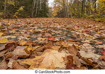 Low Angle View of Leaves Covering Carraige Road