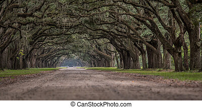 Low Angle View of Live Oak Trees