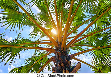 Low Angle View Of Palm Tree in the Sky
