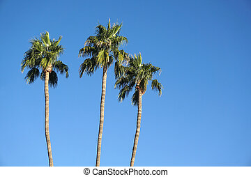 low angle view of palm tree