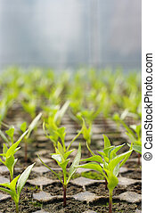 Low Angle View of Plants Growing In Greenhouse