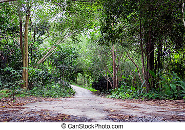 Low angle view of road in green rain forest. natural landscape background.