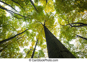 Low angle view of tall trees against the sky