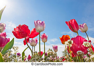 Low angle view of Tulips