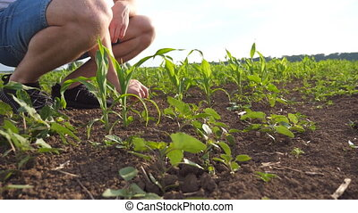 Low angle view of unrecognizable male farmer gently touching...