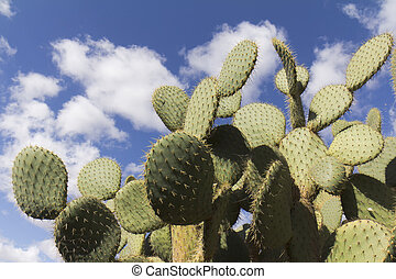 Low angle view on a part of cactus