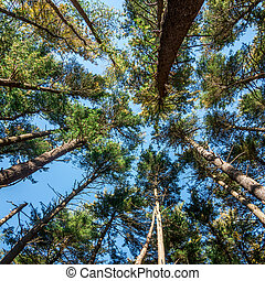low angle view trees
