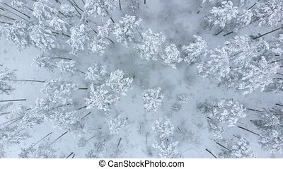 Low flight over snowy spruce forest in winter.
