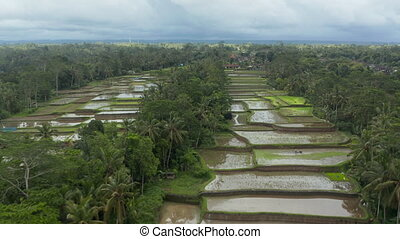 Low flying dolly aerial shot of a vast terraced paddy farm fields in tropical climate with farmer working on the crops