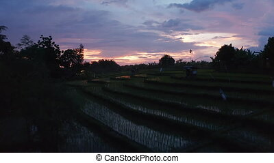 Low flying dolly aerial shot of irrigated rice field plantations on the hills at night in tropical Bali nature