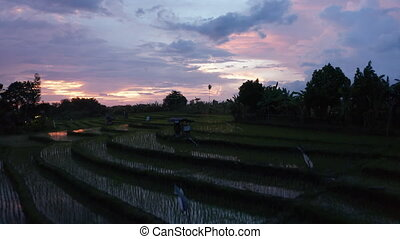 Low flying dolly aerial shot of rice field plantation farms on the hills in Bali at night 4K