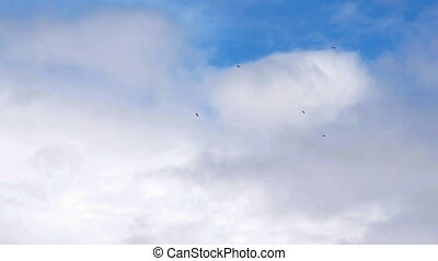Low flying flock of birds in a airspace of airport - Low...