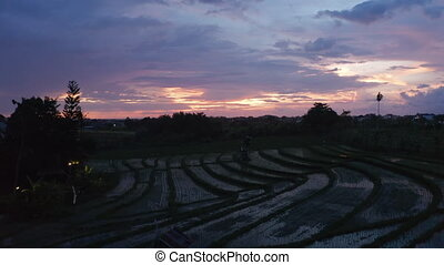 Low flying slow aerial dolly shot of a terraced rice plantation paddy fields on the slopes of a hill in Bali