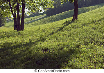 Shade and Low Light with Field and Trees