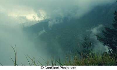 Low lying mist wrapping lush green forest - Shot of low...