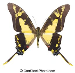 Protographium thyastes butterfly