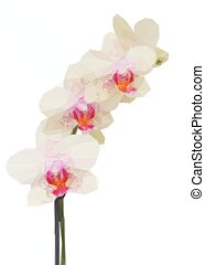 white with violet orchid flowers branch - Low poly...