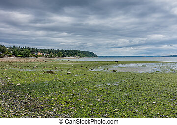 Low Tide At Normandy Park 4