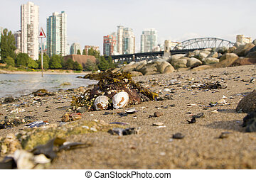 Low Tide at Vanier Park Beach in Vancouver BC