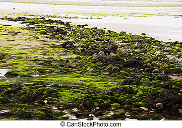 Low Tide Debris - Seaweed and rocks cover a Welse beach...
