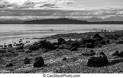 Low Tide Landscape