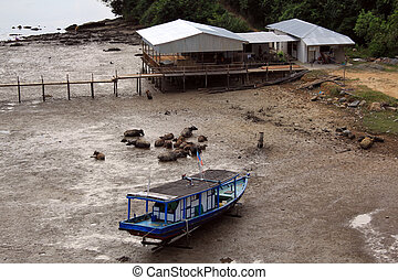 Low tide on the river in Sabah, Borneo, Malaysia