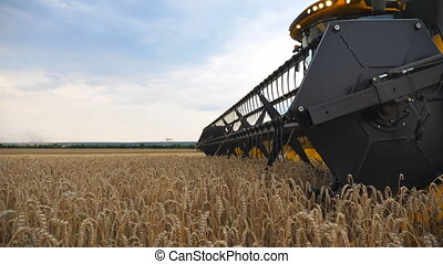 Low view of modern combine gathering crop of ripe wheat in...