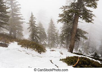 Low visibility on a day with heavy fog covering the forests of Mount San Antonio (Mt Baldy), Los Angeles county, California