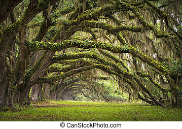 lowcountry, ász, táj, tölgy, bitófák, ültetvény, él, erdő, ...