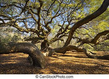 lowcountry, ангел, природа, весна, фотография, дуб, дерево, юг, сценический, южная каролина, чарльстон, пейзаж, каролина