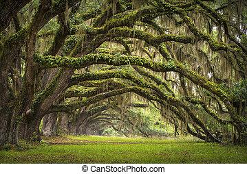 lowcountry, as, krajobraz, dąb, drzewa, plantacja, żywy, las, sc, charleston, dęby, aleja, basen, południe carolina