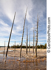 Lower geyser basin in the Yellowstone National park, USA
