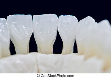 Lower human jaw with teeth isolated on black background