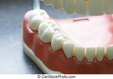 Lower jaw dental model