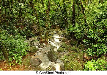 Lower La Coca Falls