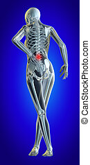 Lower spine - A 3d illustrated file of a womans lower back...
