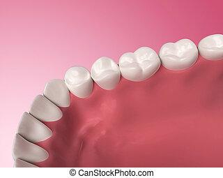 Lower teeth - 3d rendered illustration - lower teeth
