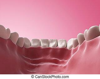 Lower teeth