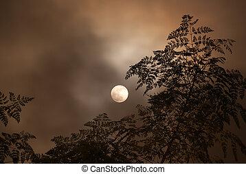 lua, em, a, nublado, noturna