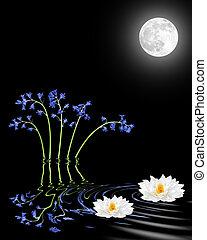 luar, flores, lírio, bluebell