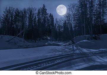 luar, noturna, inverno, floresta